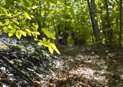 Dans la forêt cévenole